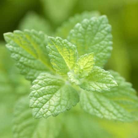 Spearmint-e-Liquid-Cloud-Chemistry